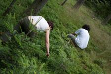 Houbaření a borůvky